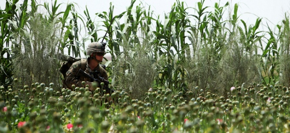 US Marine patrols a poppy field. U.S. Marine Corps photo by Lance Cpl. David A. Perez